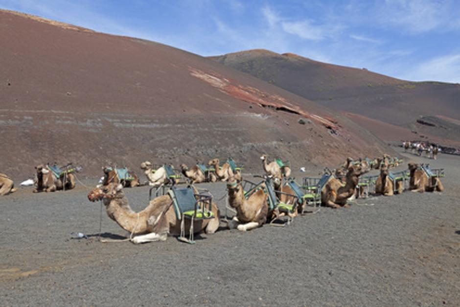 Kamelreiten auf den Kanaren
