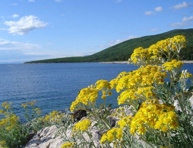 Kroatien Insel Cres