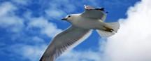 Vogelwelt im Wattenmeer
