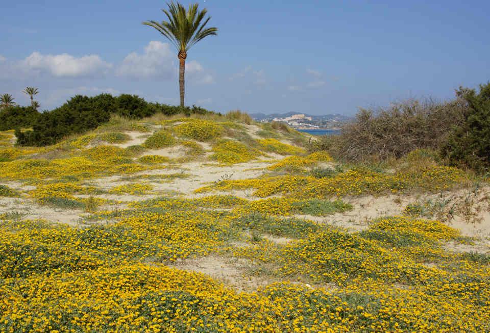 Frühling auf Ibiza